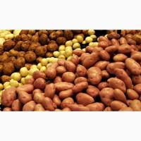 Закупка картофеля с вашей доставкой от 20 тонн