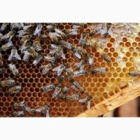 Пчелы, Пчелосемьи, Бджоли, Бджолосімї, Пасіка продам система Украинка 2019