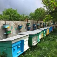 Продам міні пасіку/вулики із бджолами 9 000 грн, торг