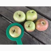 Яблоки продам
