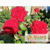 Чернозем для цветов Киев Земля для роз тюльпанов Грунт для цветов Киев