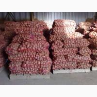 Продам картошку от 1 т. 3.7! Овощи-Фрукты в ассортименте! Опт! Доставка, г. Киев