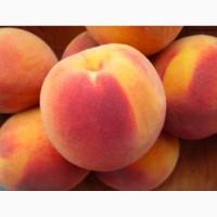 Свежий персик из своего сада