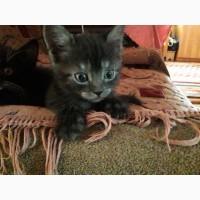 Котята, кошка, кот