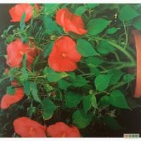 Продам садовые растения, цветы