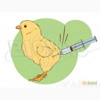 Продам вакцини для птахівництва Біовак Ізраїль