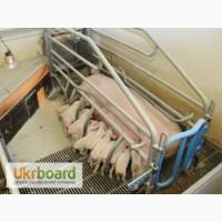 Оборудование под ключ для Свиноводства