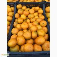 Продаємо мандарини з Грузії. Оптом