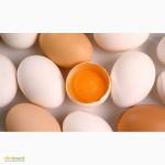 Продам яйцо фермерское