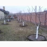 Обрезка сада, удаление кустарников+расчистка участка под строительство