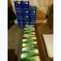 Распродажа зелёного лука
