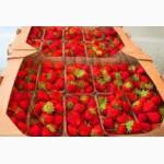 Картонный ящик, лоток под ягоду, персик, черешню, виноград