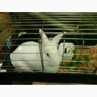 Продам клетку для декоративного кролика