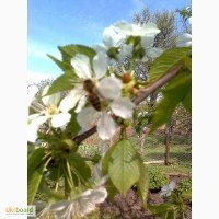Продам цветочную пыльцу