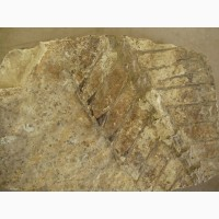 Продам фрагмент окакменелого скелета рыбы