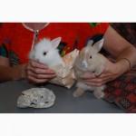 Продаём торчеухих и вислоухих разноцветных карликовых и декоративных кроликов