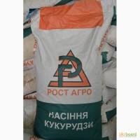 Продам насіння кукурудзи Дніпровський 181