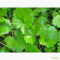Листья мать-и-мачехи 50 грамм