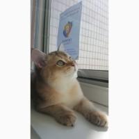 Хватит думать как уберечь кота от выпадения из окна! решение есть