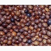 Семена вики яровой БЕЛОЦЕРКОВСКАЯ 34 элита 1 репрод
