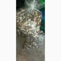 Продам сухі гриби шляпа