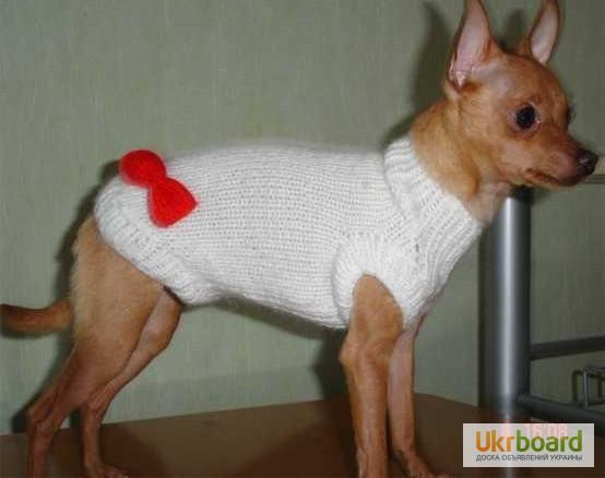 Костюм вязанный для собак