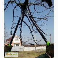 Обрезка сада, обрезка плодовых деревьев, профессионально, дешево