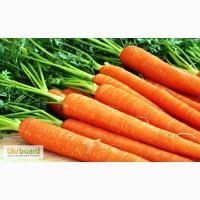 Семена морковки оптом