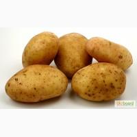 Продам Картофель, Овощи, Капуста, Лук, Постоянно