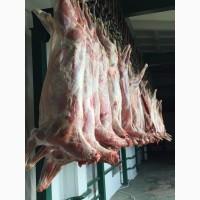 Продам мясо БАРАНИНА/ ягнятина Халяль