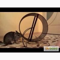 Беговое колесо для шиншиллы, крыске, белке или дегу