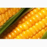 Куплю кукурузу с поля, хозяйства, элеватора по всей Украине