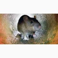 Уничтожение крыс и мышей в Харькове