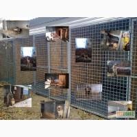 Зоогостиница гостиница для собак содержание дрессировка воспитание собак