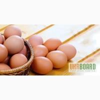 Куриное яйцо, недорого