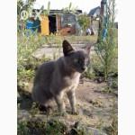 Ласковая русская голубая кошечка ищет хозяев