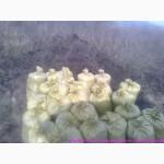 Грунт для газона Киев Земля для посева газона купить Киев