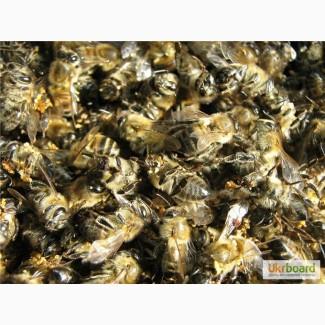 Продам пчелиный подмор, пыльца 2018 г