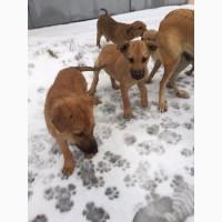 Sos щенки ищут приют