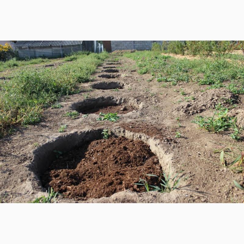 Фото 3. Почва для голубики Киев Грунт для посадки голубики продажа Киев. Торф кислый