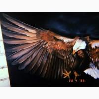 Картина маслом размер 130 см на 80 см