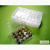 Упаковка для перепелиных яиц квадратная