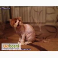 Стрижка котов без наркоза. Стрижка котов Одесса.Стрижка котов с выездом на дом