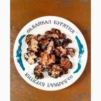 Аралия грушанка заманиха иван-чай красный корень родиола лимонник чага элеутерококк