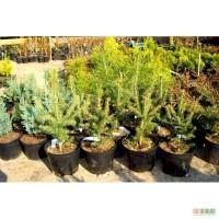 Питомник растений предлагает деревья и кустарники для озеленения и ландшафтного дизайна.