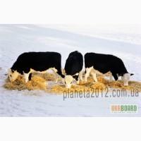 Миколад-сорбент микотоксинов кормов животных продаем