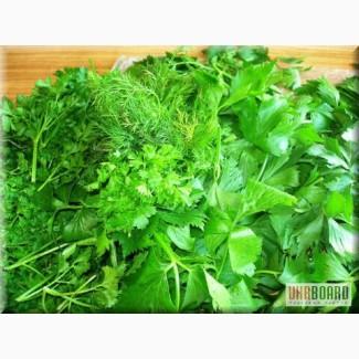 Продам зелень - петрушка и укроп свежие, зеленые. По Украине.