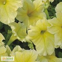 Продам семена Петуния крупноцветковая низкорослая Желтая F1