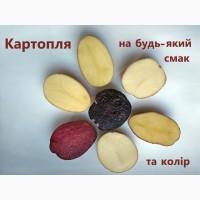 Продаж насіннєвої картоплі, сертифікована еліта від оригінатора
