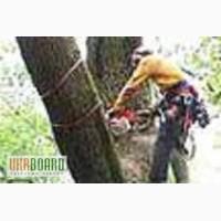 Спиливание деревьев Киев